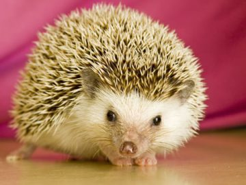 Huh? There was a hedgehog swimming in the punchbowl.